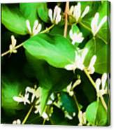 A Honeysuckle Painting Canvas Print