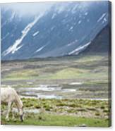 A Horse With No Name Canvas Print