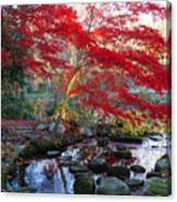 A Japanese Maple With Colorful, Red Canvas Print