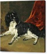 A King Charles Spaniel Canvas Print