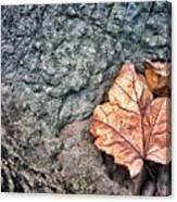 A Leaf's Bow Canvas Print