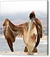 A Leg Up, Brown Pelican Canvas Print