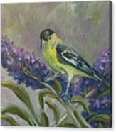 A Lesser Goldfinch Canvas Print