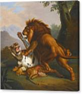 A Lion And Tiger In Combat Canvas Print