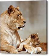 A Lioness And Cub Canvas Print