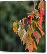 A Little Rain Must Fall Canvas Print