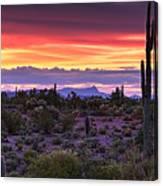A Magical Desert Morning  Canvas Print