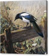 A Magpie Observing Field Mice Canvas Print
