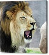 A Male Lion, Panthera Leo, Roaring Loudly Canvas Print