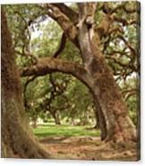 A Maze Of Oak Trees  Canvas Print