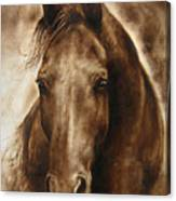 A Misty Touch Of A Horse So Gentle Canvas Print