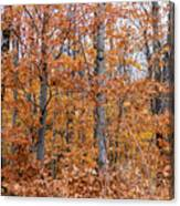 A Mixture Of Orange Canvas Print
