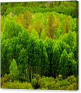 A Moment Of Green Canvas Print