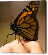 A Monarch Butterfly At The Butterfly Canvas Print