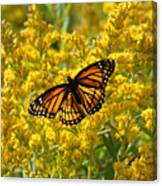 A Monarch World Canvas Print