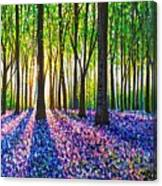 A Morning Walk Through Bluebells Canvas Print