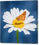A Moth Collects Pollen On A Single Daisy Blossom. Canvas Print
