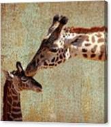 A Mother's Kiss Canvas Print