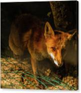 A Nocturne  Meeting With A Fox In The Woodland Canvas Print