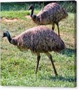 A Pair Of Emu Canvas Print