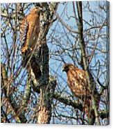 A Pair Of Hawks Canvas Print