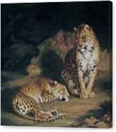 A Pair Of Leopards Canvas Print