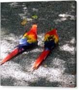 A Pair Of Parrots Canvas Print