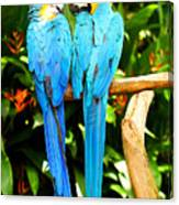 A Pair Of Parrots Canvas Print