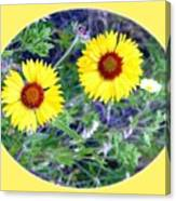 A Pair Of Wild Susans Canvas Print