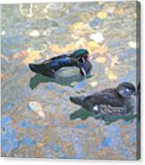 A Pair Of Wood Ducks Canvas Print
