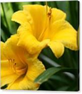 A Pair Of Yellow Day Lilies Canvas Print
