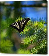 A Pale Swallowtail Canvas Print