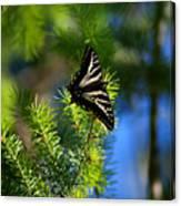 A Pale Swallowtail Vertical Canvas Print