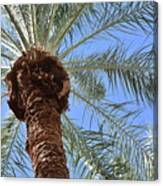 A Palm In The Sky Canvas Print