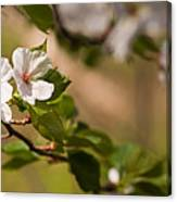 A Panoramic View Of A Cherry Tree Canvas Print