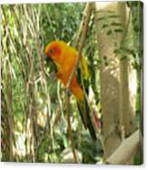 A Parakeet In Paradise Canvas Print
