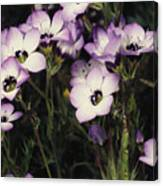 A Patch Of Wildflowers With White Canvas Print