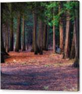 A Path Of Redwoods Canvas Print