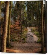 A Path Through The Woods Canvas Print