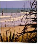 A Peek At The Shore Canvas Print