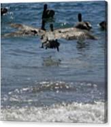 A Pelican In-flight At Playa Manzanillo Canvas Print