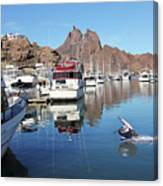 A Pelican Lands In The Old San Carlos Marina, Guaymas, Sonora, M Canvas Print