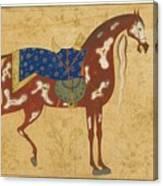 A Piebald Stallion Canvas Print