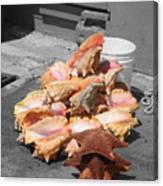 A Pile Of Seashells Canvas Print