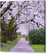 A Pink Pathway Canvas Print