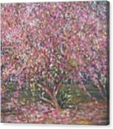 A Pink Tree Canvas Print
