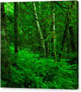 A Place In The Forest Canvas Print