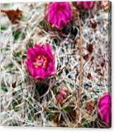 A Prickly Bed Canvas Print