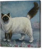 A Himalayan Cat Canvas Print