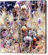 A Rather Thorny Subject Canvas Print